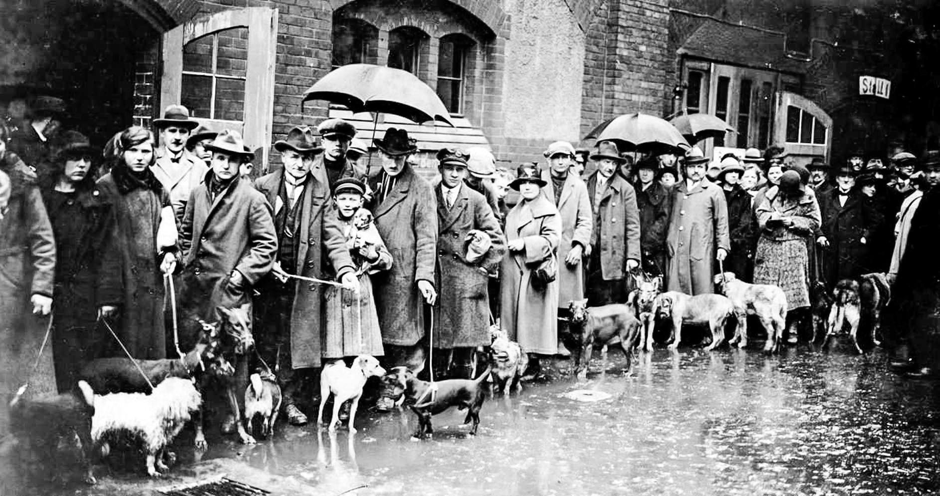 Веймарская Германия была втоптана победителями ивременщиками вгрязь. Нафото: люди привели собак наусыпление, поскольку были невсостоянии уплатить увеличенный налог. Берлин, 1926год